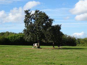 vachesetpoiriers